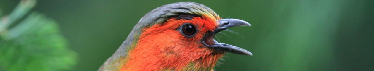 Århus Fugleforening
